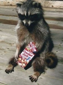 Busted_Coon
