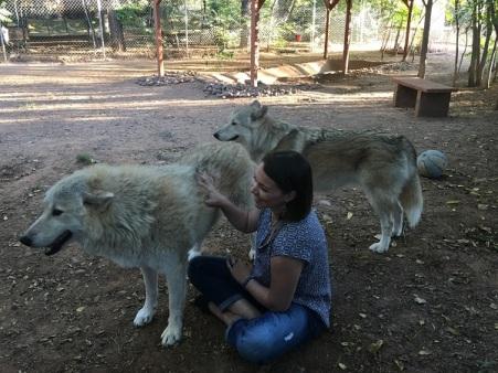 sedona_wolves